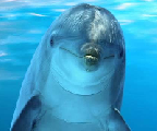 dolphin's Avatar